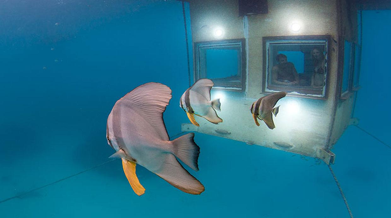 Pasa la noche en una habitaci n bajo el mar de frica for Habitacion de hotel bajo el mar