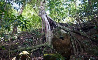 [Blog] Quillabamba: conoce la selva del Cusco