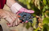 Perú es el octavo productor mundial de frutas y hortalizas