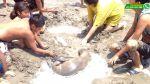 WhatsApp: rescatan lobo de mar bebé herido en playa de Chilca - Noticias de lobos marinos