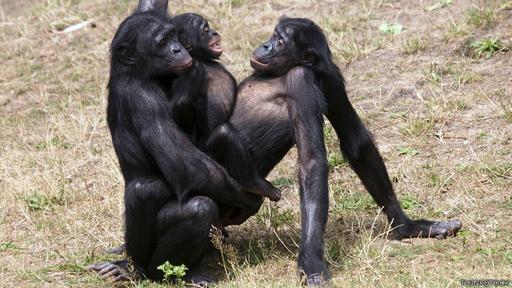 [Foto] ¿Existen realmente los animales homosexuales?