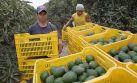 El Perú se consolida como segundo exportador mundial de paltas