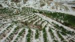 Huancavelica: granizadas provocan pérdidas de cultivos - Noticias de huancavelica