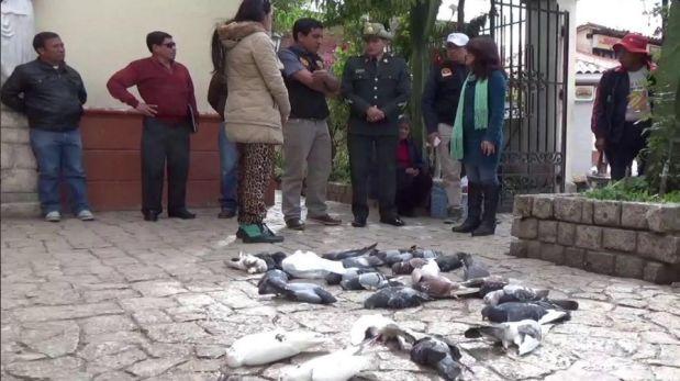 Huancayo: masiva muerte de palomas en inmediaciones de catedral