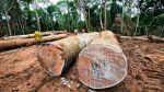Indígenas y el Estado llegaron a consenso por ley forestal - Noticias de cultura