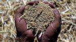 Perú multiplicó por seis las exportaciones de quinua en 2 años - Noticias de tailandia 2013