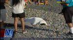 Miraflores: tablista fue hallado sin vida en playa Redondo - Noticias de muere ahogado