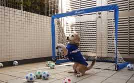 YouTube: perro futbolista cautiva a miles en tierno video