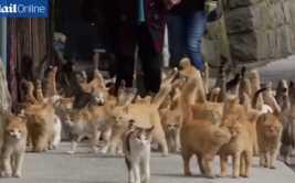 YouTube: la rara isla en la que abundan los gatos (VIDEO)