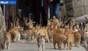 YouTube: la isla japonesa donde existe más gatos que humanos