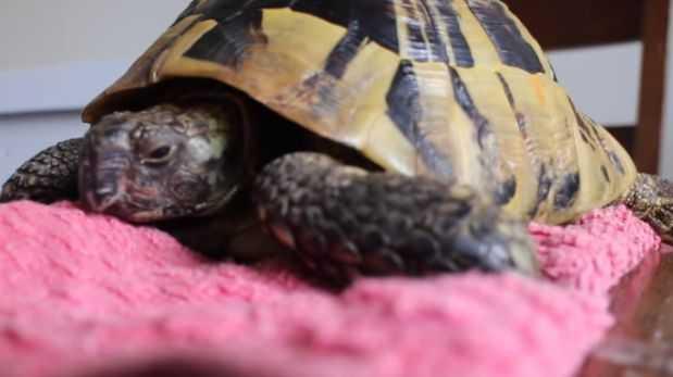 YouTube: tortuga es congelada por cuatro meses y sobrevive