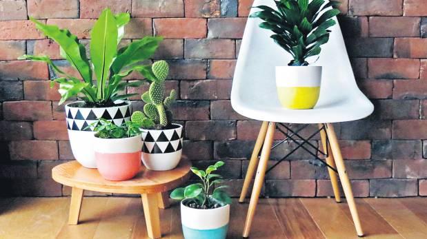 Vida verde en casa opciones de macetas para cultivar - Macetas para cocina ...