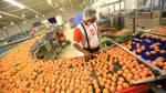 Avivel: la empresa que usa la tecnología para producir huevos - Noticias de líderes empresariales
