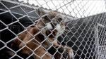 Colombia libera 149 animales salvajes - Noticias de nolberto solano