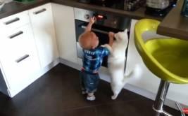 YouTube: gato no permite que bebé se queme con horno (VIDEO)