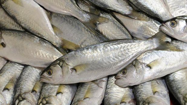 Cu les son los pescados m s consumidos por los peruanos for Cria de peces para consumo humano