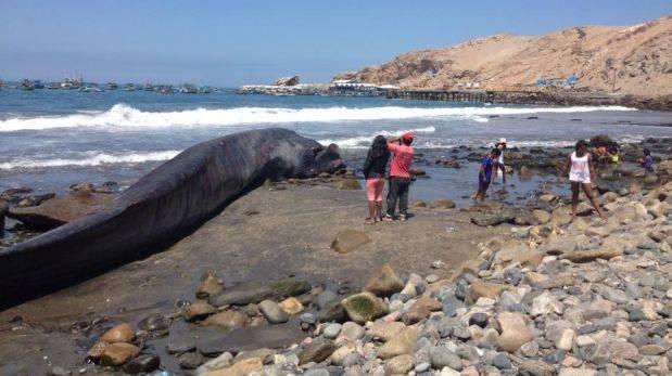 Arequipa: ballena de 18 metros varó en playa La Planchada