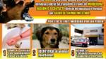 Prevención de rabia canina: vacunación será en todo Arequipa - Noticias de mariano melgar