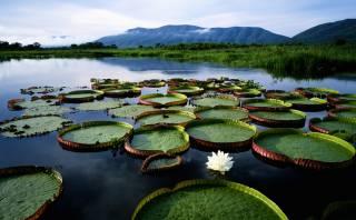 Conoce Pantanal, el humedal de Sudamérica más grande del mundo