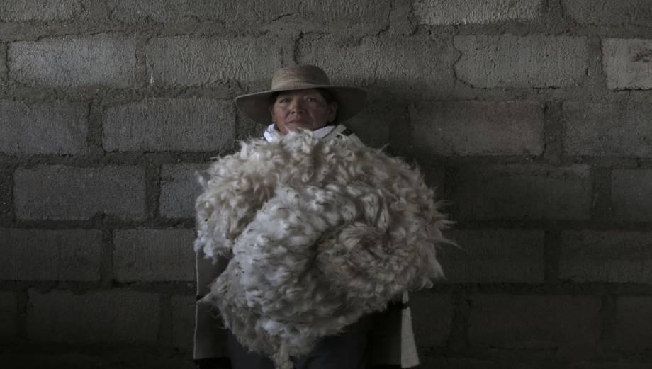 Crianza de alpacas cambia la vida de Marcapomacocha [FOTOS]