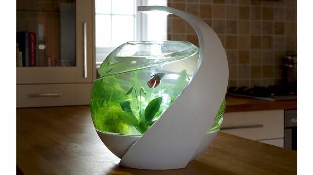Listo para tener un pez como mascota esta pecera te - Peces para tener en casa ...