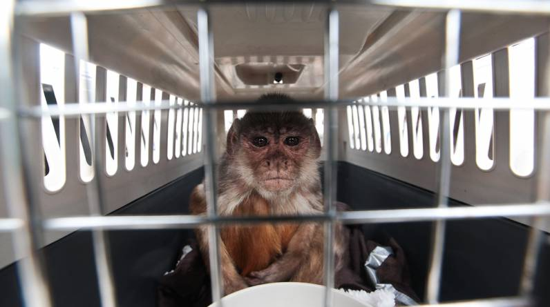 Los 40 animales fueron salvados de cautiverio o de comercio ilegal por Animal Defenders International. (El Comercio / Juan Ponce)