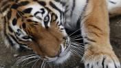 Calentamiento global amenaza una de cada seis especies animales