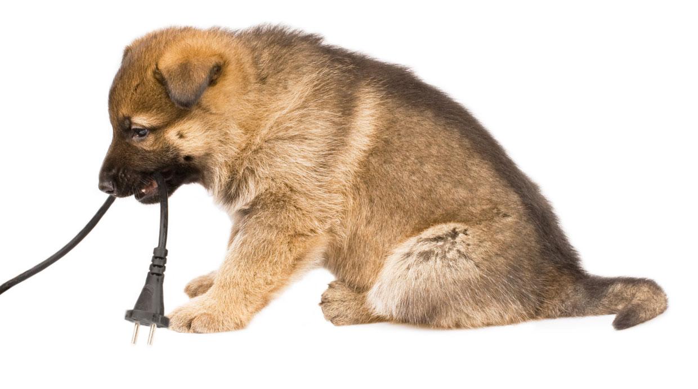Conoce los peligros a los que est expuesta tu mascota en - Mascotas en casa ...