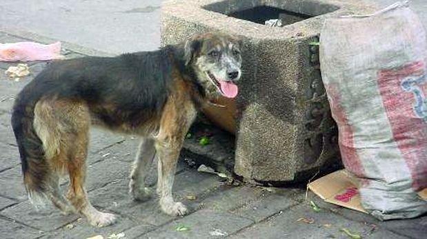 Municipio de Puno afirma que no sacrificará perros callejeros