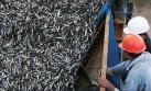 La temporada de anchoveta no se verá afectada por El Niño