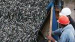 Acuerdan suspender por cinco días la pesca de anchoveta - Noticias de resolución ministerial