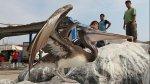 Denuncian matanza de pelícanos en empresa del Callao - Noticias de ong mundo azul