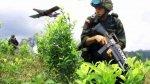 Colombia admite que está produciendo más cocaína que antes - Noticias de junta nacional de drogas