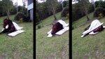 El tierno caballo que duerme como si fuese humano [VIDEO] - Noticias de mundialmente
