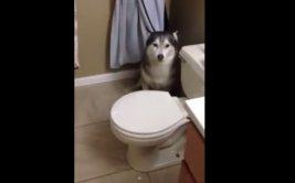 Perro discute con su dueña porque no quiso bañarse [VIDEO]