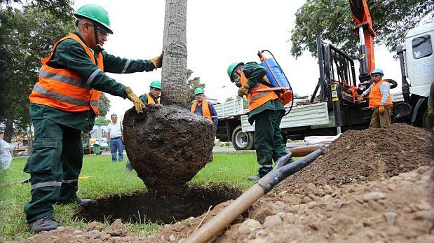 Los tres primeros árboles que salieron del by-pass fueron plantados hoy. (Municipalidad de Lima)