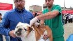Arequipa combatirá rabia canina con S/. 1'136.610 - Noticias de resolución ministerial