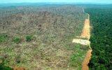 """América Latina pierde biodiversidad de forma """"contundente"""""""