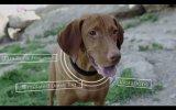 Científicos crean collar inteligente para entrenar perros