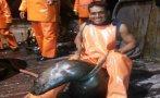 Facebook: pescador maltrató a lobo marino en Chimbote