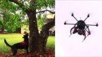 Drones y perros combaten una plaga mortal en Florida - Noticias de acid survivors trust international