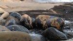 Estados Unidos: Fuga de petróleo en California - Noticias de limpieza de playas
