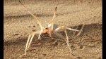 Las 10 nuevas especies más sorprendentes descubiertas en 2014 - Noticias de japón