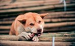 La domesticación de perros empezó hace más de 27.000 años