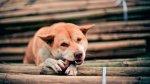 La domesticación de perros empezó hace más de 27.000 años - Noticias de