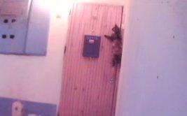 """Gato de """"buenos modales"""" toca timbre para entrar a casa [VIDEO]"""