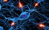 Crean neuronas a partir de células sanguíneas