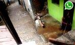 WhatsApp: tubería rota causa estragos en asentamiento del Rímac