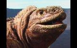 Erupciona volcán en el único santuario de iguanas rosadas
