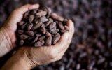 La cafeína reduciría el riesgo de sufrir disfunción eréctil